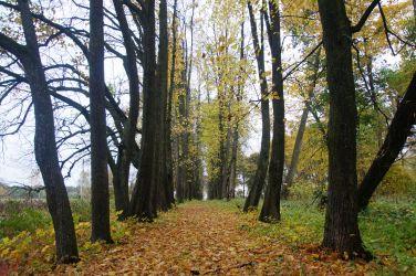Markutiškių dvaro parkas